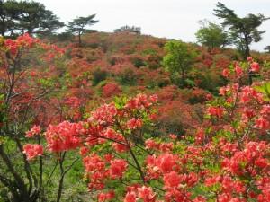 高柴山(牧野2)