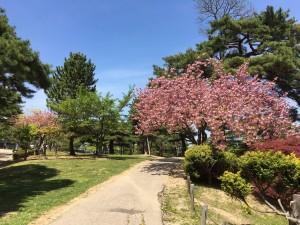 麓山公園2