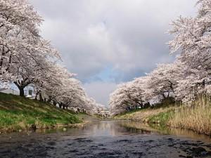 0408藤田川4