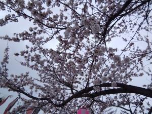 20190411須賀川市釈迦堂川桜_190411_0007