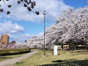 20190416 荒池公園_190417_0002
