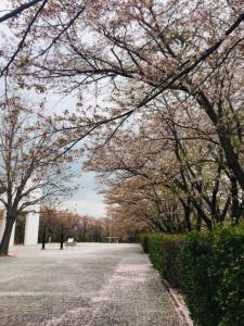 20190424 逢瀬公園_190424_0001