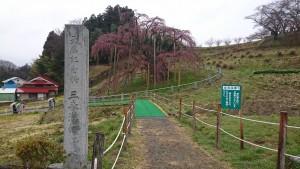 410 三春滝桜_190410_0004