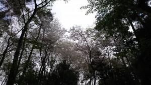 427 五百渕公園_190427_0001
