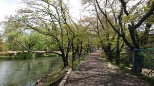 427 香久池公園_190427_0007