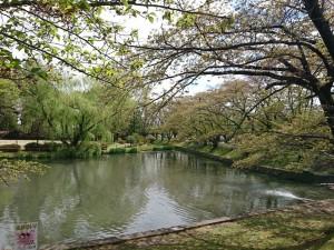 427 香久池公園_190427_0008