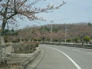 47 東山霊園_190407_0008