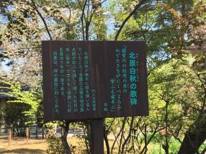 20190504 須賀川牡丹園_190504_0007