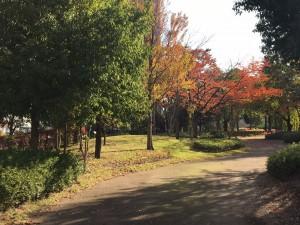 20191031 21世紀記念公園_191031_0004