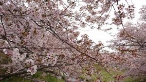 藤田川_190421_0003