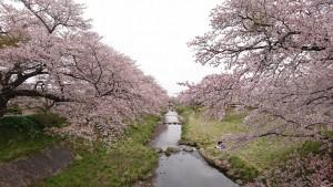 藤田川_190421_0004