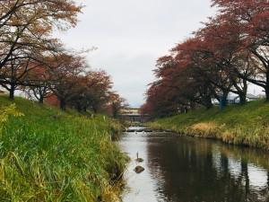 20191111 郡山市 藤田川_191111_0009