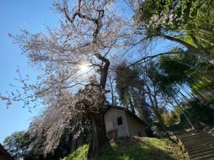 0403田村神社_200403_0009