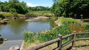 山ノ井公園_200527_0015