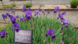 逢瀬公園_200509_0014