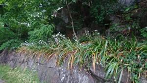0516 南川渓谷_200516_0022