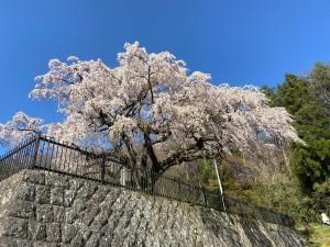 20210407永泉寺の桜_210407_4