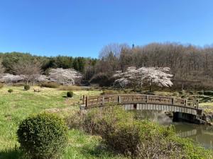 20210407藤沼湖公園の桜_210407_1