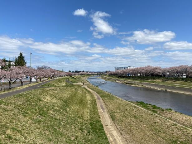 20210407釈迦堂川の桜_210407_6