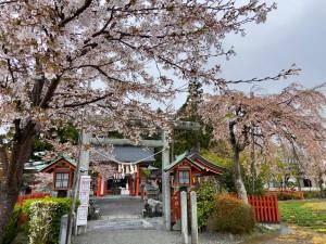 20210414大鏑矢神社の桜_210414_2